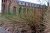 Grass [ EF 17-40mm 1:4 L ]