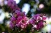 In Bloom [ EF 50mm 1.8 ]