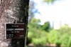 Eucalyptus camaldulensis [ EF 50mm 1.8 ]