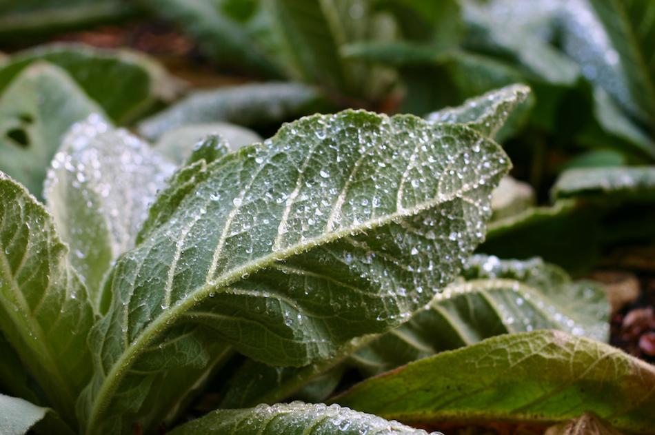 Misty Leaf [ EF 50mm 1.8 ]