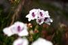 Flower in Focus [ EF 50mm 1.8 ]