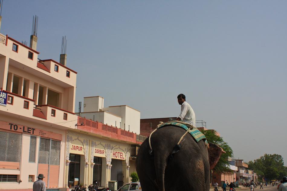 Suburban Elephant [ EF 28mm 1.8 ]