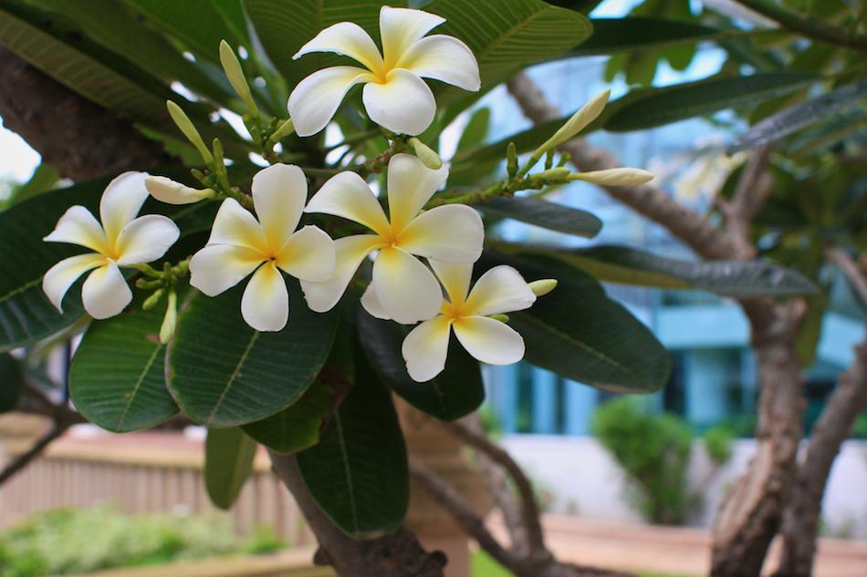 Flowery [ EF 28mm 1.8 ]