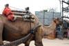Camel [ EF 28mm 1.8 ]