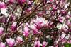 Pink [ EF 28mm 1.8 ]