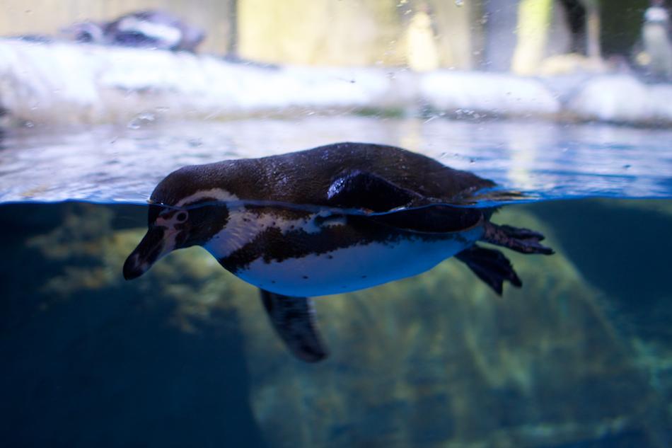 Penguin [ EF 28mm 1.8 ]