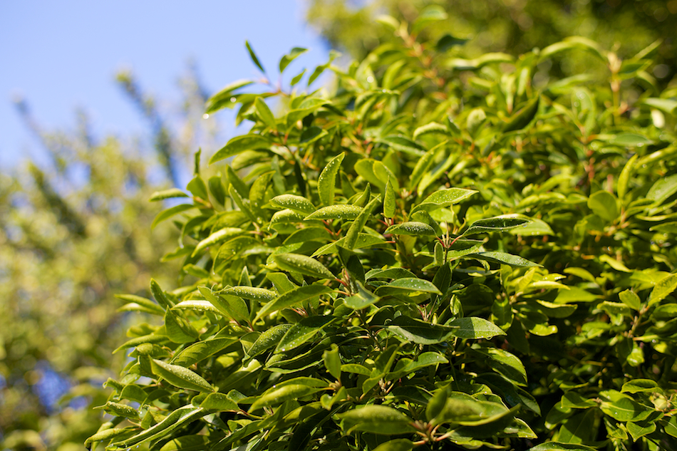 Morning Leaves [ Zeiss Planar T* 50mm 1.4 ZE ]