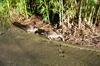 Ducks [ Zeiss Planar T* 50mm 1.4 ZE ]