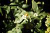 Little Flower [ Zeiss Planar T* 50mm 1.4 ZE ]