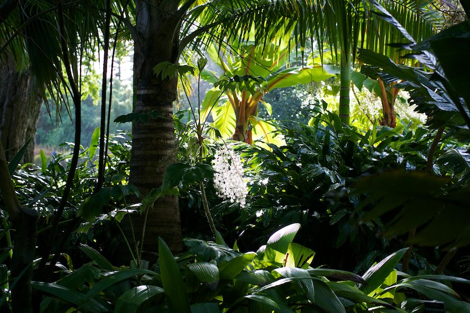 Jungle [ Zeiss Planar T* 50mm 1.4 ZE ]