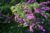 Purple [ Zeiss Planar T* 50mm 1.4 ZE ]