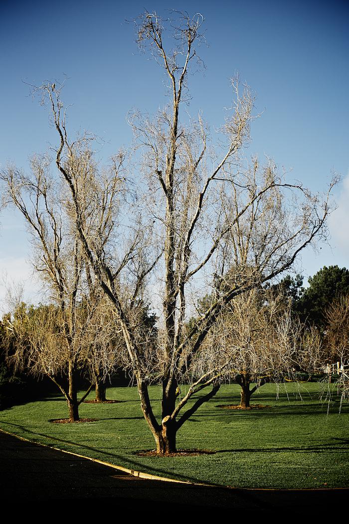 Winter Trees [ Zeiss Planar T* 50mm 1.4 ZE ]