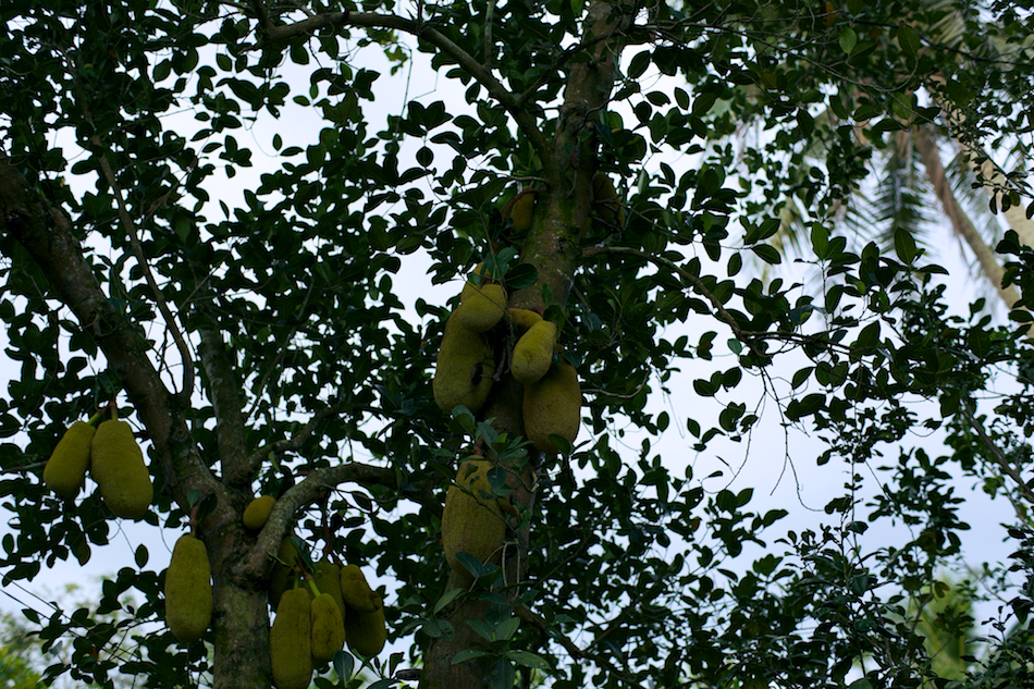 Fruit [ Zeiss Planar T* 50mm 1.4 ZE ]