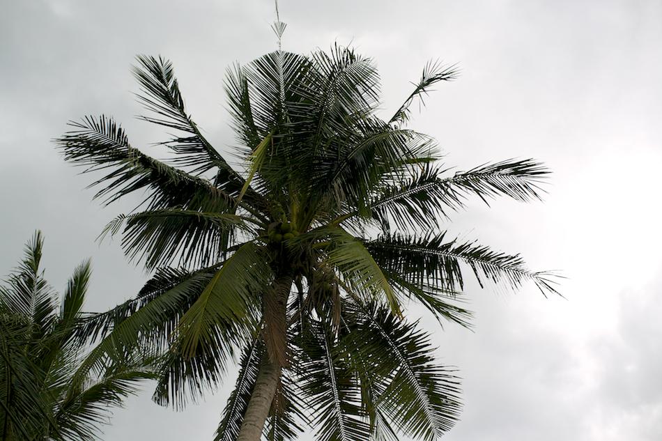 Palms [ Zeiss Planar T* 50mm 1.4 ZE ]
