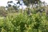 Sunlight on Leaves [ Zeiss Planar T* 50mm 1.4 ZE ]