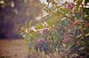 Colours [ Zeiss Planar T* 50mm 1.4 ZE ]