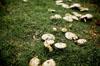Mushrooms [ Zeiss Planar T* 50mm 1.4 ZE ]