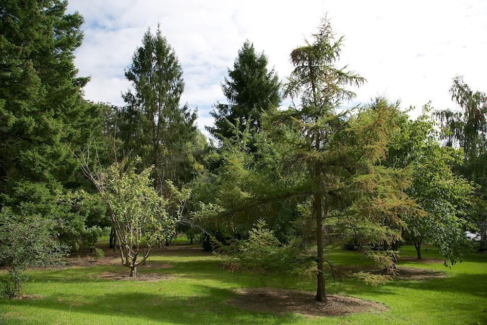 Mt Lofty Botanic Gardens [ EF 24-105mm 1:4 L IS ]