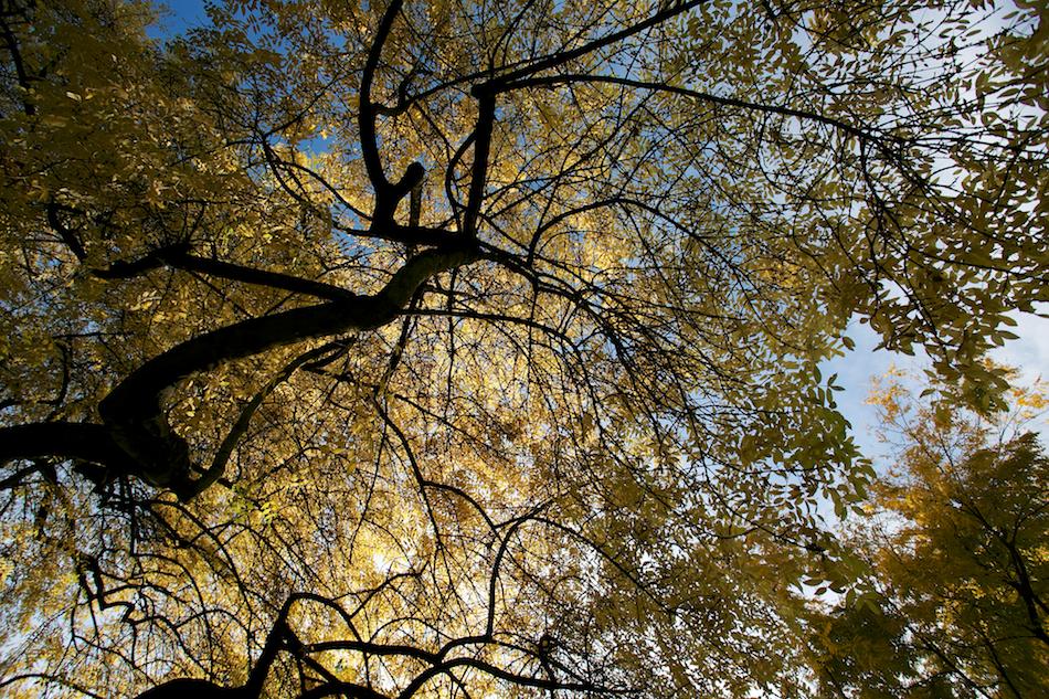 Leaves Above [ EF 17-40mm 1:4 L ]