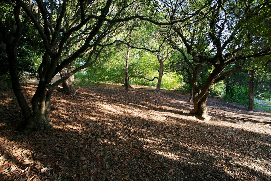 Leaves Below [ EF 17-40mm 1:4 L ]