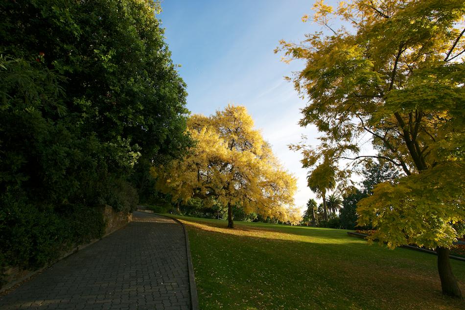 Royal Tasmanian Botanical Gardens [ EF 17-40mm 1:4 L ]