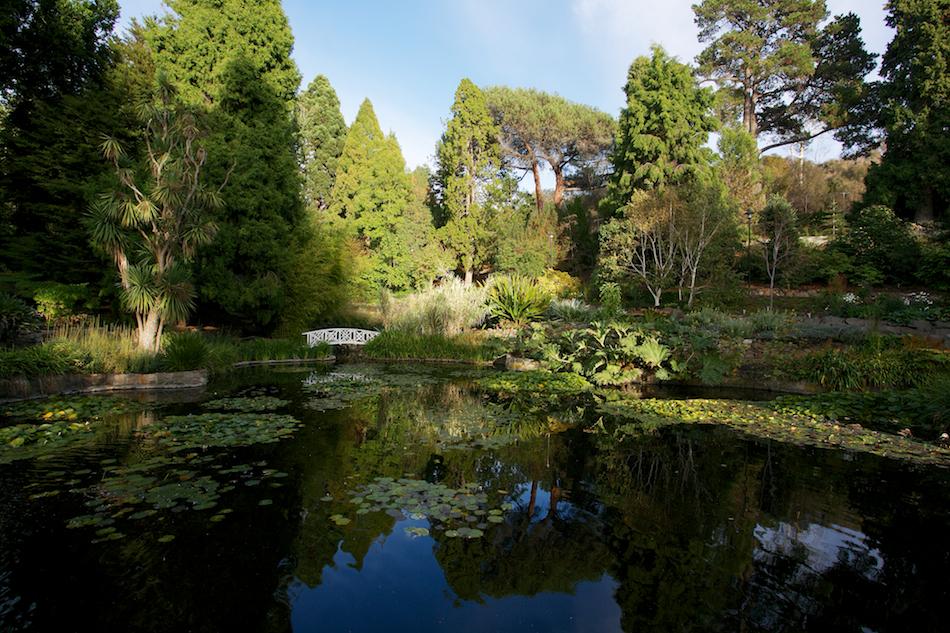 Lily Pond [ EF 17-40mm 1:4 L ]