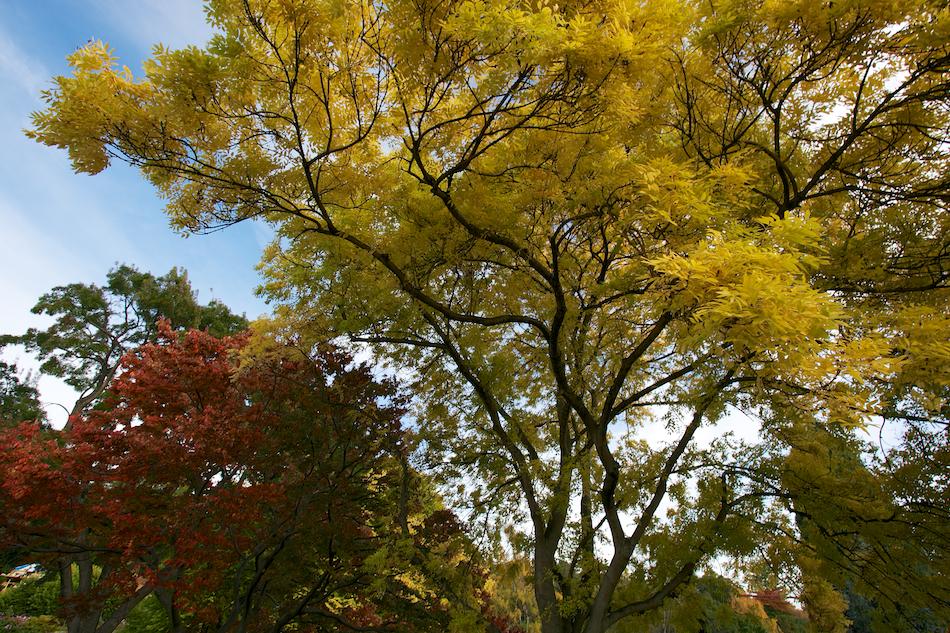 Tree Tops [ EF 17-40mm 1:4 L ]