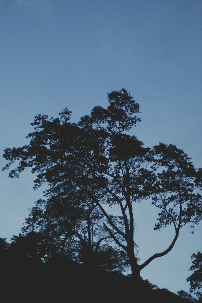 Twilight [ Zeiss Planar T* 50mm 1.4 ZE ]