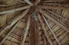 Jungle Creatures [ EF 24-105mm 1:4 L IS ]