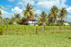 Provincial Housing [ Zeiss Planar T* 50mm 1.4 ZE ]
