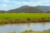Cambodian Fields [ Zeiss Planar T* 50mm 1.4 ZE ]