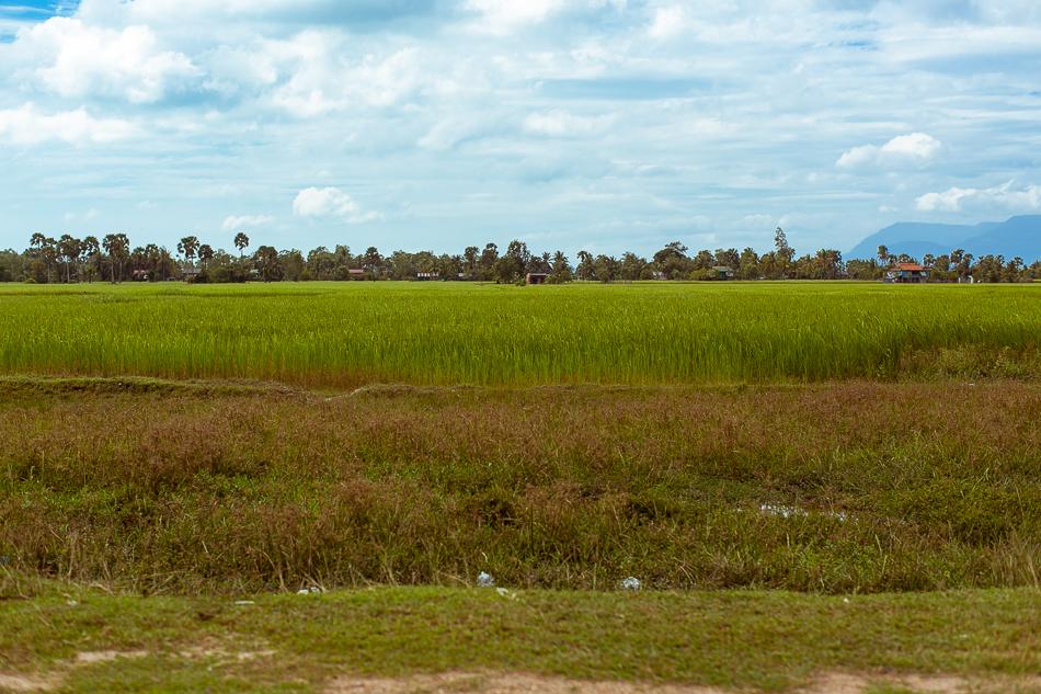 Cambodian Fields [ Zeiss Planar T* 50mm 1.4 ZE ]