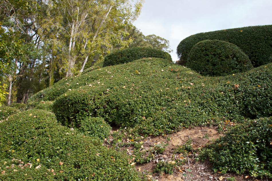 Hedge [ EF 17-40mm 1:4 L ]