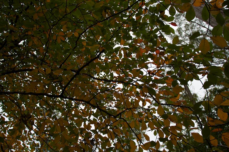 Look Up [ EF 17-40mm 1:4 L ]