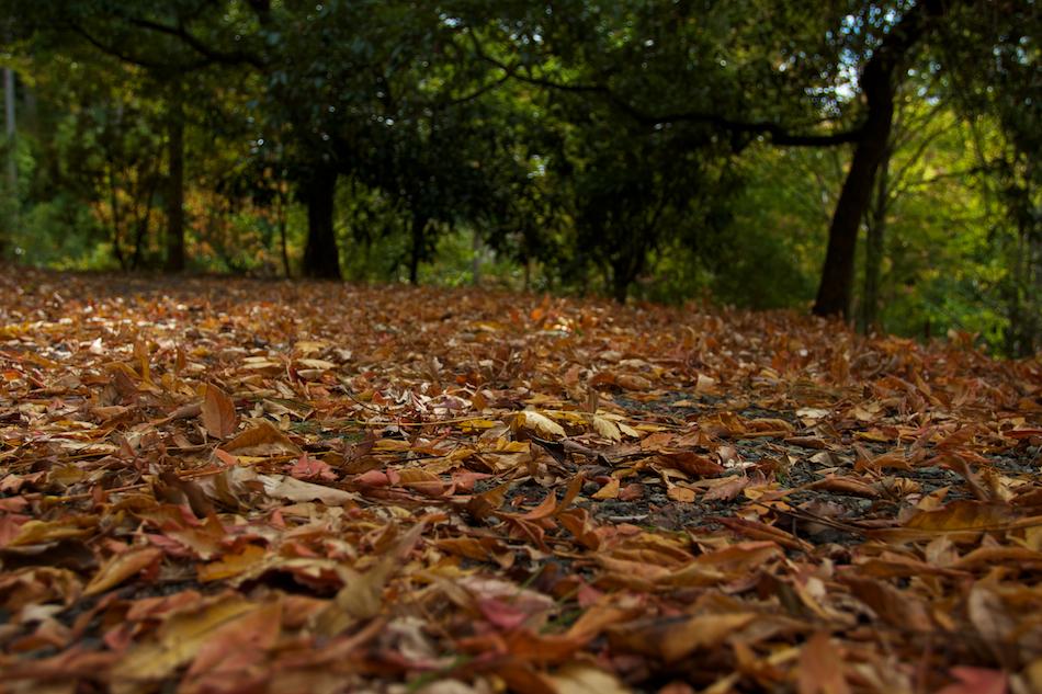 Floor of Leaves [ EF 17-40mm 1:4 L ]