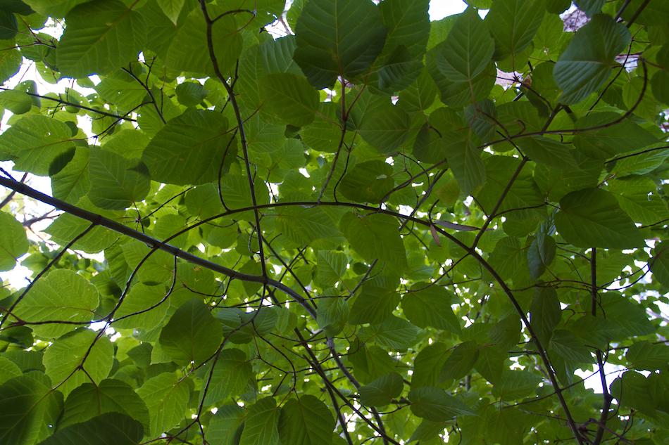 Green [ EF 17-40mm 1:4 L ]