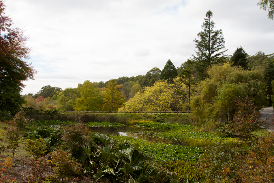 Duck Pond [ EF 17-40mm 1:4 L ]