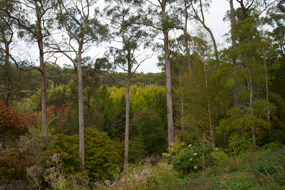 Botanic View [ EF 17-40mm 1:4 L ]