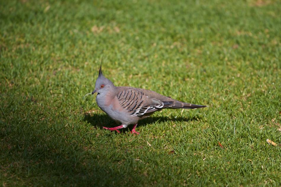 Walking Bird [ EF 70-200mm 1:4 L ]