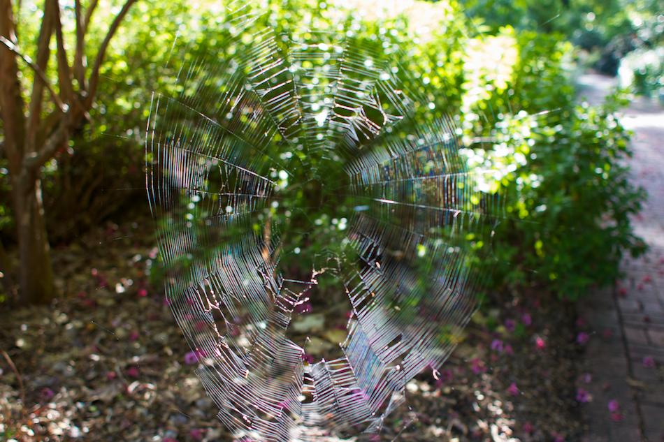 Web [ EF 28mm 1.8 ]