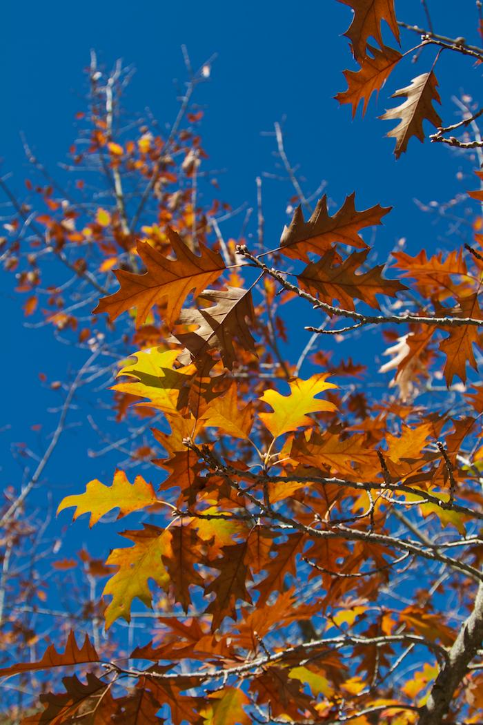 Orange, Brown, Blue [ EF 24-105mm 1:4 L IS ]